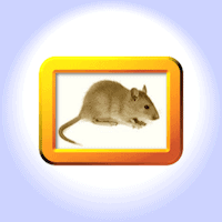 Suriphobie angst vor mäusen mäusephobie